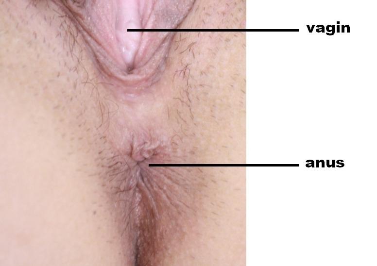 Stimulez l'anus de votre femme