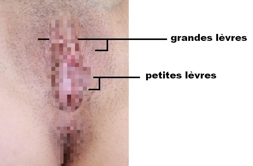 Les lèvres du vagin sont très sensibles et érogènes