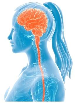 L'orgasme au niveau du cerveau
