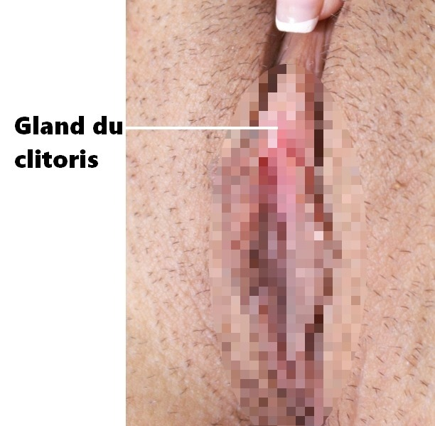 Le gland du clitoris (sexe nu)