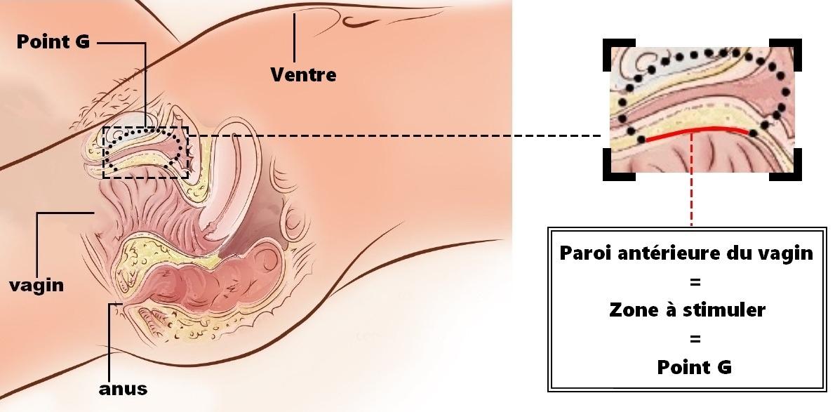 L'orgasme, la pénétration vaginale et le pénis