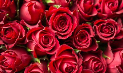 Des idées coquines pour la Saint-Valentin
